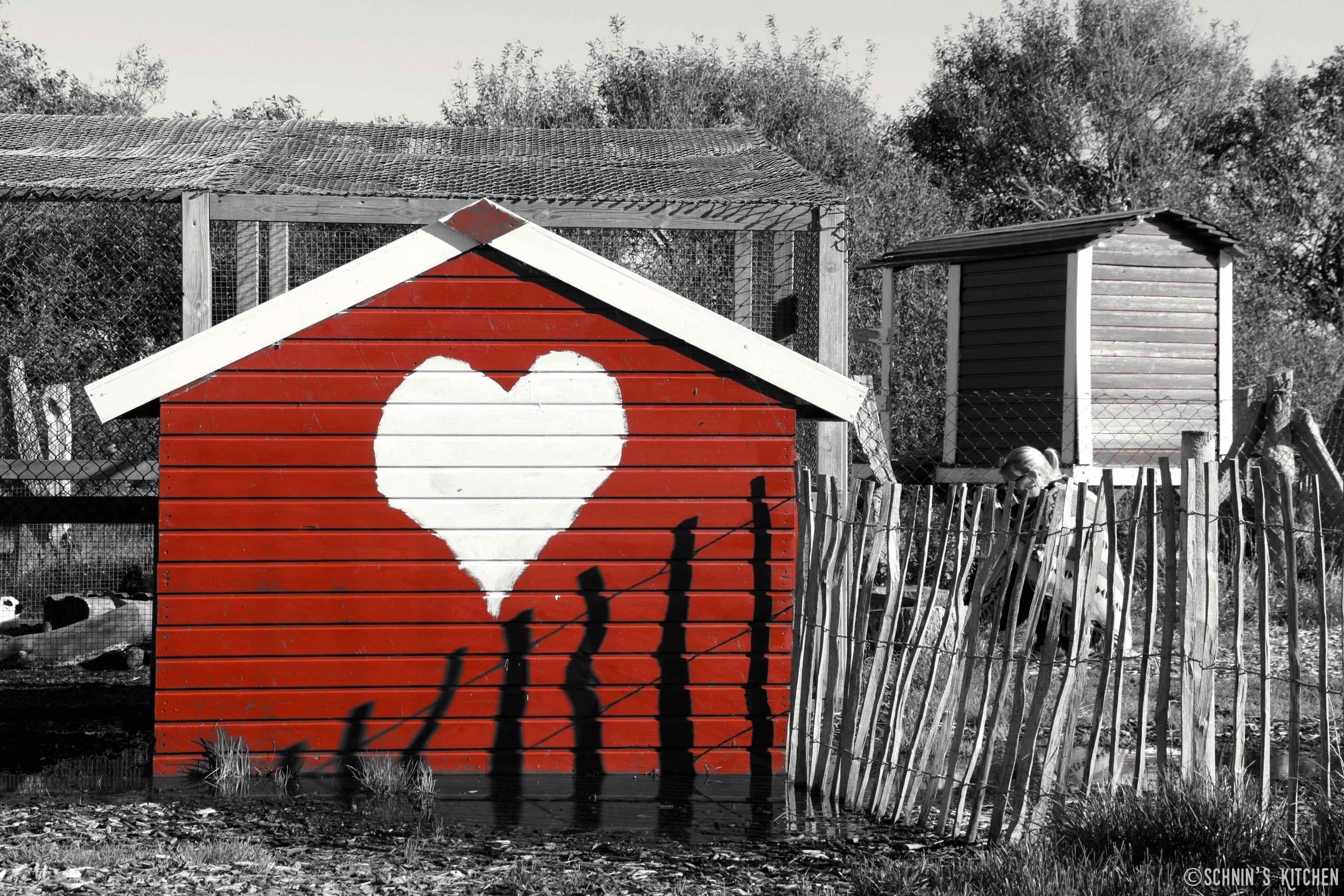Schnin's Kitchen: Bloggen mit Herz auf Föhr